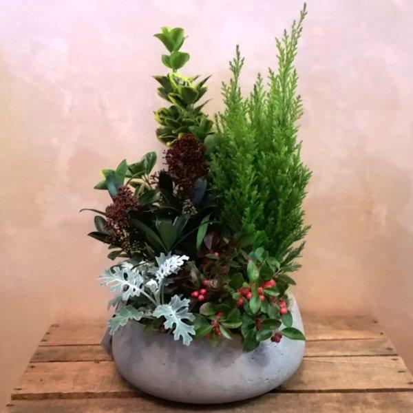 Composizione di piante giardino piccola giardino fiorito - Composizione giardino ...