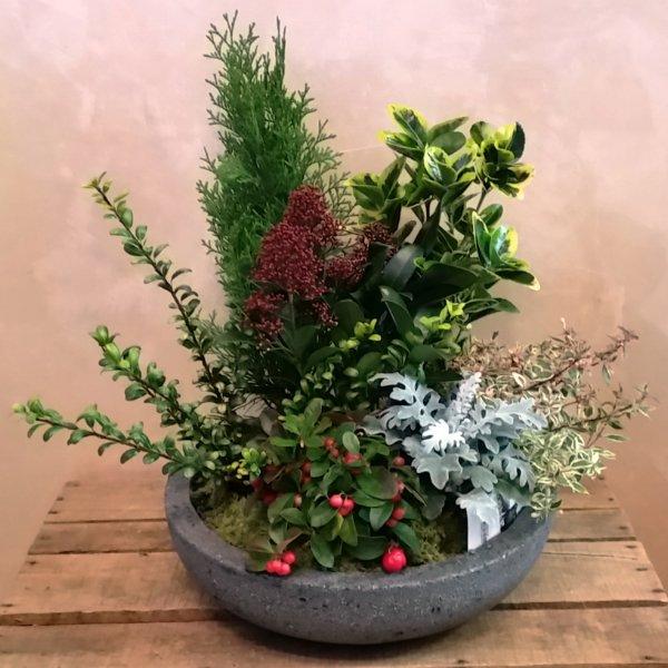 Composizione di piante giardino media giardino fiorito - Composizione giardino ...